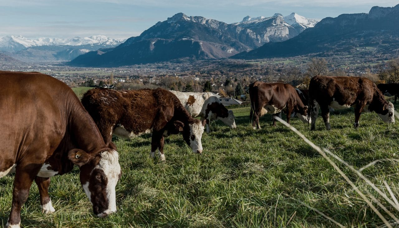 Les producteurs laitiers