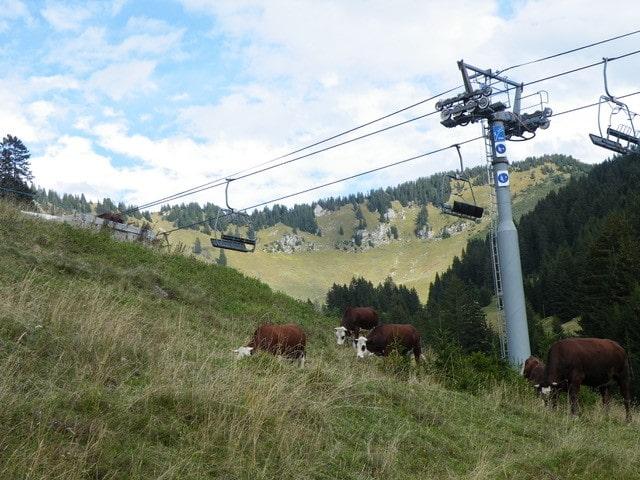 Sous la neige des alpages : la complémentarité entre pistes de ski et alpages